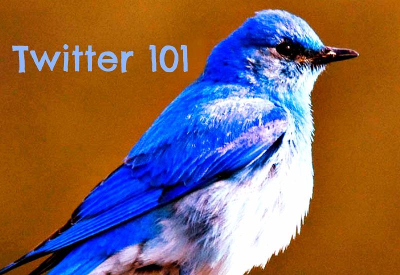 bluebird 2crop